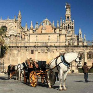 a castle and a horse in spain