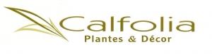 Calfolia